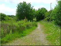 SO6302 : Footpath on waste ground by Gill
