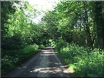 TQ1952 : Track on the edge of Headley Heath by Jonathan Hutchins