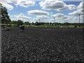 TQ1557 : Pachesham Equestrian Centre: Berta Arena by Jonathan Hutchins