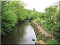 ST0611 : River  Culm  near  Uffculme by Martin Dawes