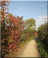 ST5076 : NCN 26 near Sheepway by Derek Harper