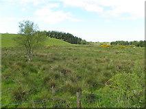 H5475 : Streefe Glebe by Kenneth  Allen