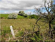 H5575 : Rough ground, Streefe Glebe by Kenneth  Allen