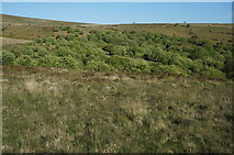 SX6870 : Mixed woodland, Venford Reservoir by jeff collins