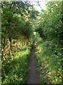 TL3857 : Pathway near Hardwick by Dave Thompson