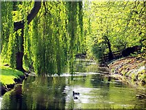 TF0920 : The river through the park at Bourne, Lincolnshire by Rex Needle