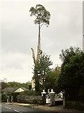 SX9065 : Tree-felling, Cricketfield Road, Torquay by Derek Harper
