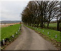 SO7113 : Post lined road towards Severn Mill near Westbury-on-Severn by Jaggery