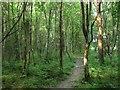 TQ3428 : Standgrove Wood by Simon Carey