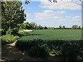TL3945 : Field by Cambridge Road by Hugh Venables