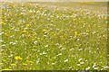 SO8844 : Wildflowers in Croome Park by Philip Halling