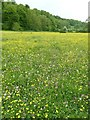 SU7333 : Buttercups, clover and dandelion clocks by Rob Farrow