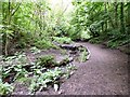 SJ9594 : Culvert in Gower Hey Woods by Gerald England