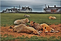 SM8003 : Ladies a Lazing Near St Anne's Lighthouse by Deborah Tilley