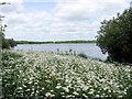 TQ5306 : Arlington Reservoir by PAUL FARMER