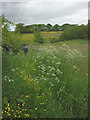 NY6813 : Flowery footpath, Great Asby by Karl and Ali