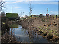 TQ3784 : Bulrushes in the Olympic Park by Stephen Craven