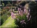 SX9050 : Flower, Coleton Fishacre by Derek Harper