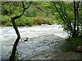 SH5946 : Afon Glaslyn, Aberglaslyn Pass, looking downstream by Christine Johnstone