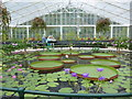 TQ1877 : Inside the Water Lily House by Basher Eyre