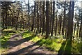 NC8200 : Forest Track above Rhives, Golspie by Andrew Tryon