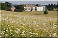 SO8844 : Ox-eye daisies and Croome Court by Philip Halling