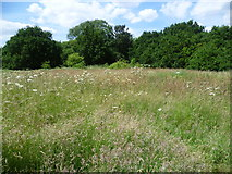 TQ2187 : Grassland at Welsh Harp Open Space seen from the Capital Ring by Marathon