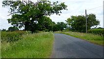 SO8149 : Jennett Tree Lane by Jonathan Billinger