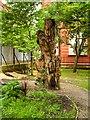 SJ8497 : Transgender Memorial Garden, Sackville Park by David Dixon