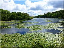 SR9794 : Bosherton Lily Ponds by Raymond Knapman
