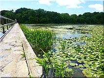 SR9794 : Footbridge over the Lily Pond at Bosherton by Raymond Knapman