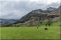 NY2906 : Great Langdale by Ian Capper