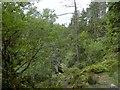 NN8266 : Wooded ravine at Bruar by Douglas Nelson