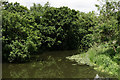 TQ0760 : River Wey, Byfleet by Peter Trimming