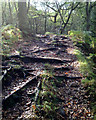 SJ9866 : Tree roots across the path, Dane Valley Way by Robin Stott