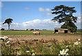 SU0629 : Pigs on Bishopstone Down by Derek Harper