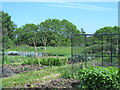 TL3606 : Mill Lane Allotment by Mike Quinn
