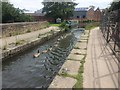 SJ9398 : Procession of Canada Geese on the Peak Forest Canal by Bill Boaden