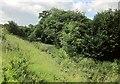 SU0329 : Grassland south-east of Compton Chamberlayne by Derek Harper