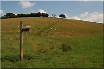 SE9436 : Yorkshire Wolds Way in Swin Dale by Chris