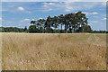 SU9982 : Fields near Wexham Park Hospital by Alan Hunt