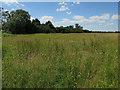 TL3565 : Field by Bucking Way Road by Hugh Venables