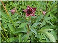 NS4665 : Marsh Cinquefoil by Lairich Rig