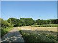 TG3721 : Farmland by Catfield Hall by Adrian S Pye