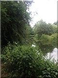 TL4352 : River near Hauxton by Dave Thompson