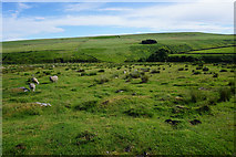 SD9531 : Land for sheep on New Laithe Moor by Bill Boaden