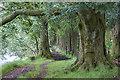 NO0200 : Path by the River Devon by William Starkey