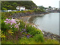 NM6796 : Wild flowers on the edge of Mallaig Harbour by Malc McDonald