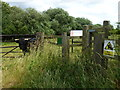 TF0802 : Bull In Field - Southorpe Paddock Nature Reserve by Richard Humphrey