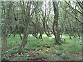 NT6342 : Gordon Moss Nature Reserve by M J Richardson